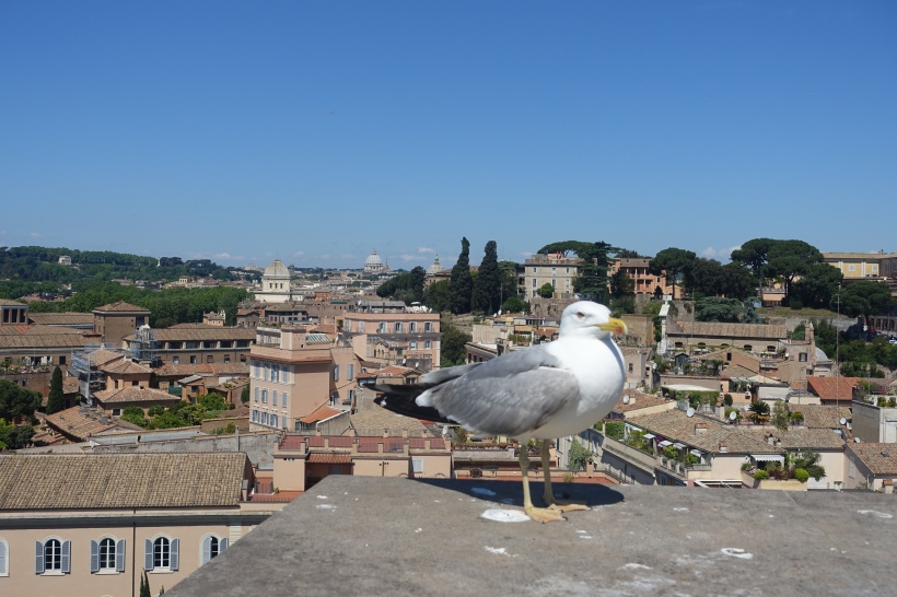 A seagull perched upon the Roman Forums.