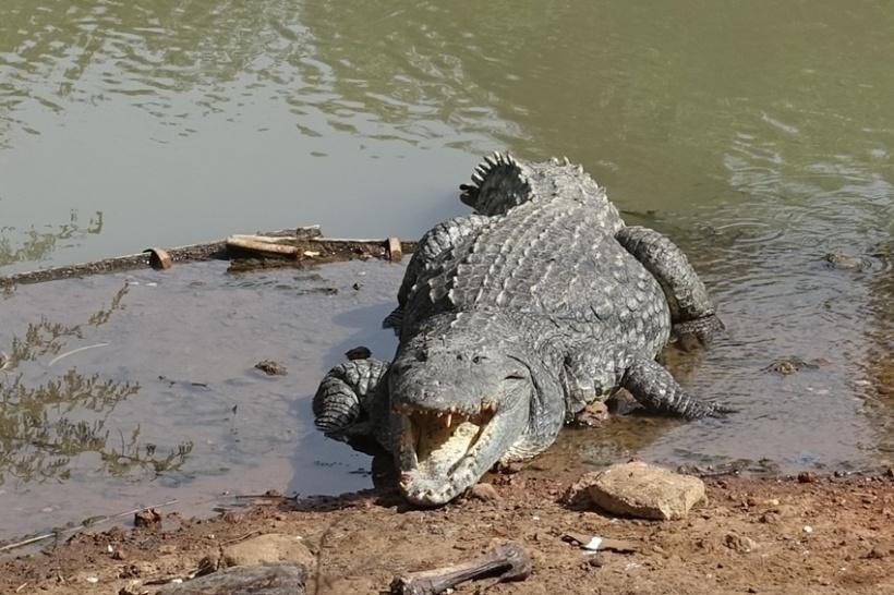 Eek. A croc.