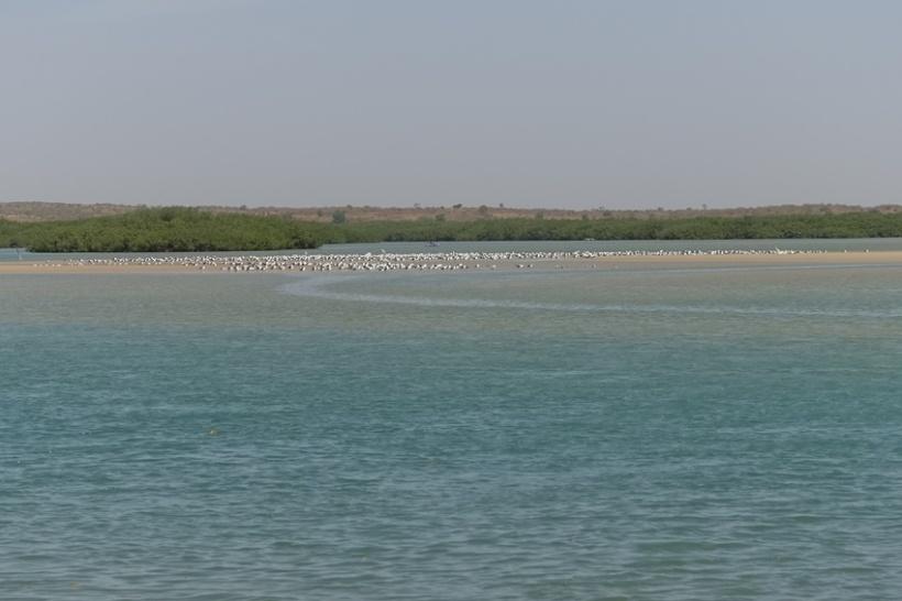 Birds at Somone.